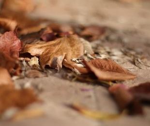 Uno de los otoños más secos de la historia