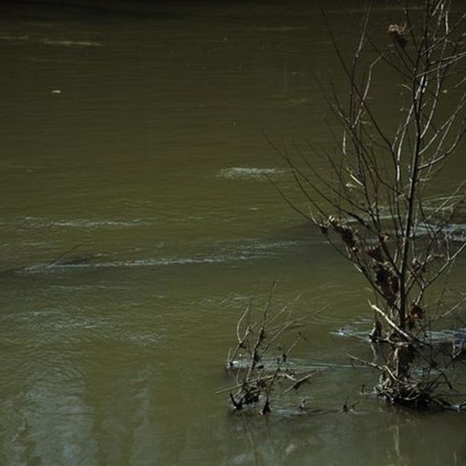 Algunas enfermedades que transmite el agua (II)