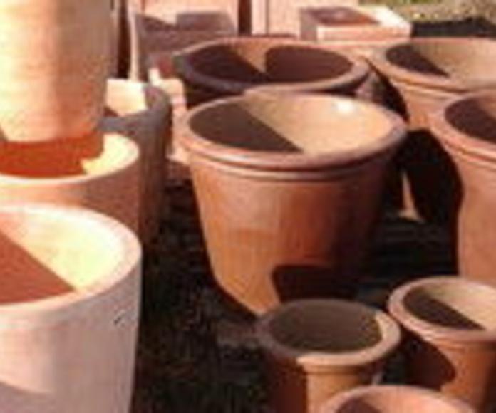 Maceteros: Tipos césped de Viveros Bonsai