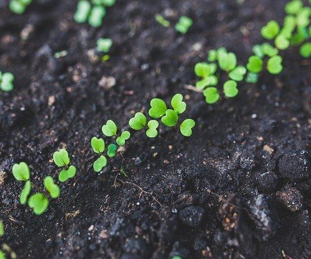 Haz un espacio en tu jardín para tu propio huerto