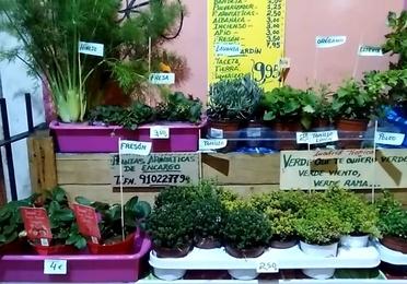 Plantas aromáticas y semilleros