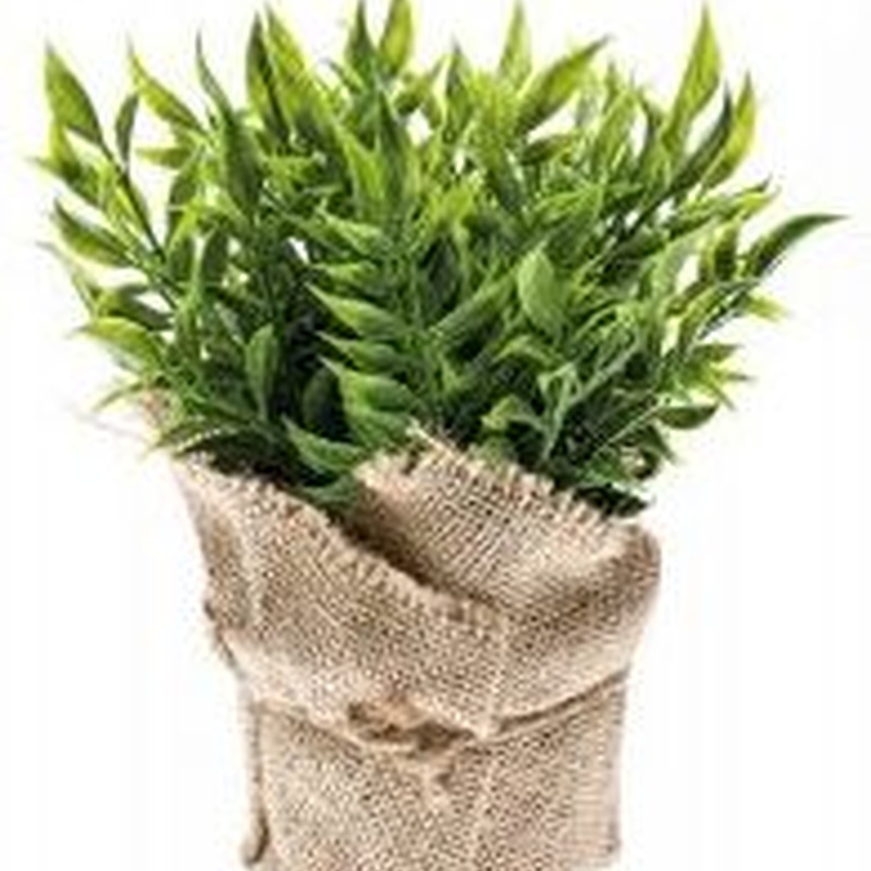 Arbusto ruscus artificial Valencia