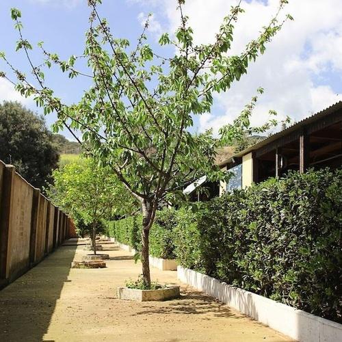 Centro de Adiestramietno | Centre Caní De Pedracastell