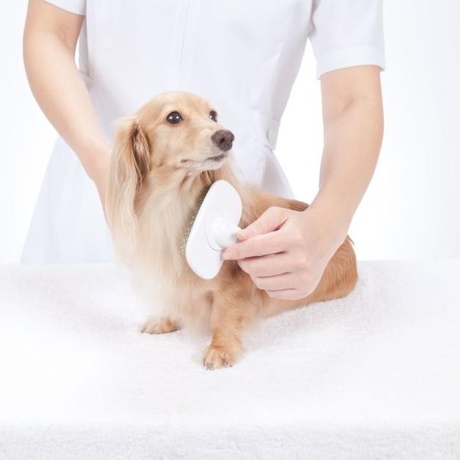 Cómo sanear el pelo de los perros de pelo más duro