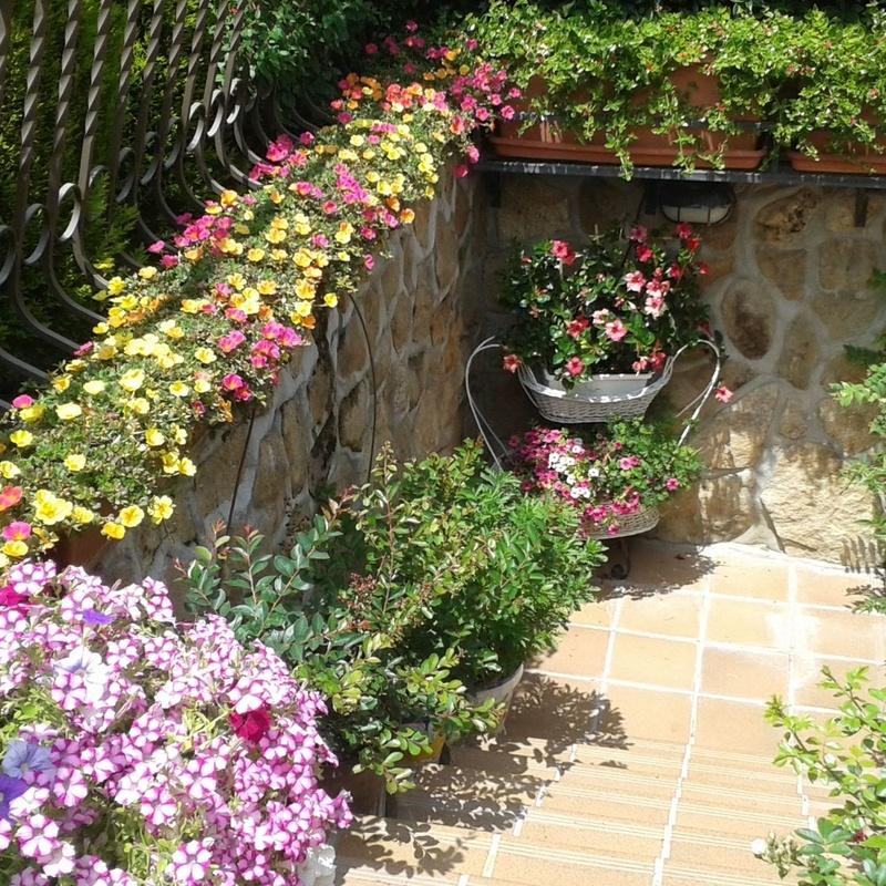 Diseños: Servicios de Jardinería Sefer