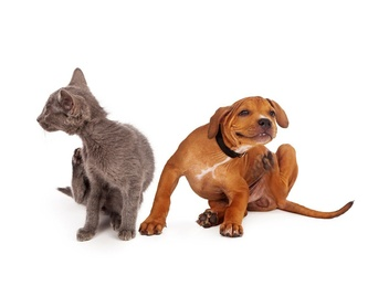 Peluquería canina : Servicios de Centro Veterinario Juan XXIII