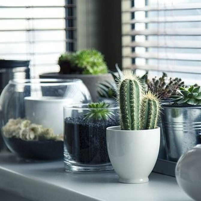 ¿Cómo preparar las plantas para la mudanza?