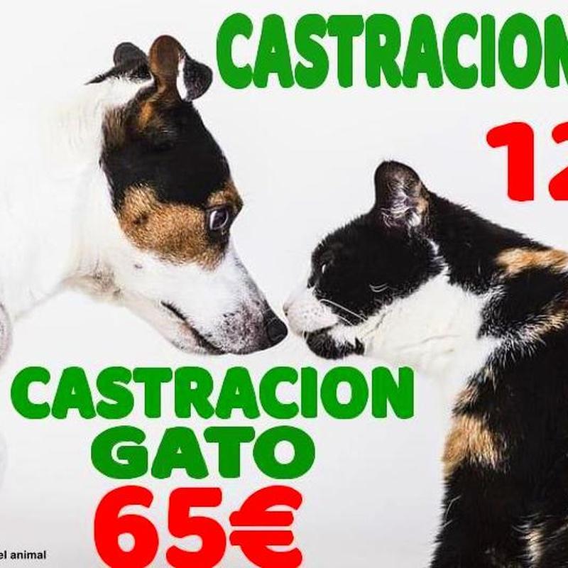 Castración perro y gato, precios campaña todo el año, en Mascotes Castellbell Centgre Veterinari S.L