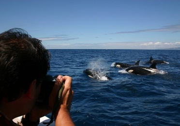 Avistamiento de Ballenas, Delfines y Orcas (3 horas)