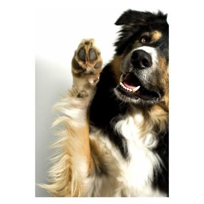 Todos los productos y servicios de Alimentos para animales: Centro Veterinario Ciudad de los Ángeles