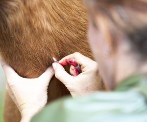 Implantación de microchip en clínica veterinaria Akos