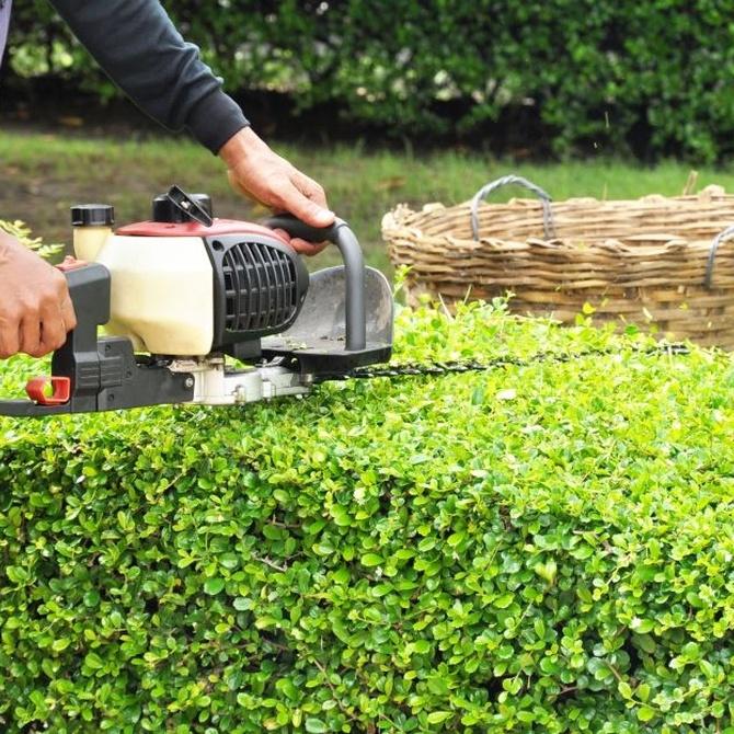 La importancia del cuidado del jardín