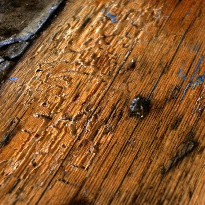 Cuidado con la carcoma, una amenaza para la madera