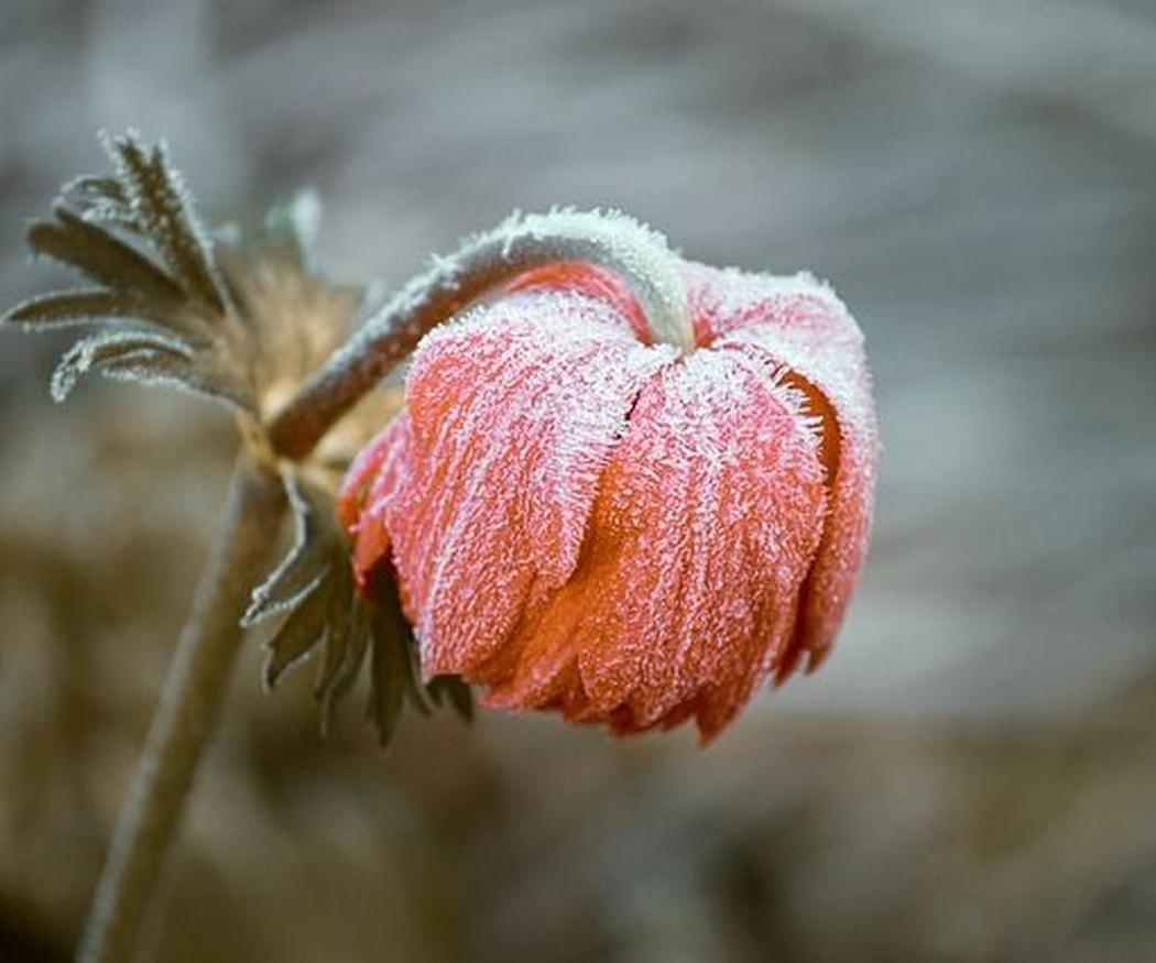 Cómo mantener el jardín cuidado en invierno