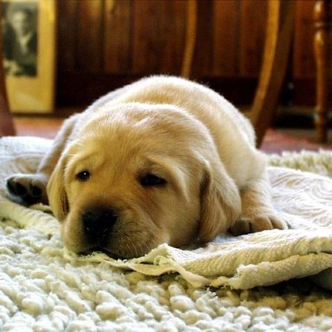 Ácaros: el enemigo que vive en tu alfombra