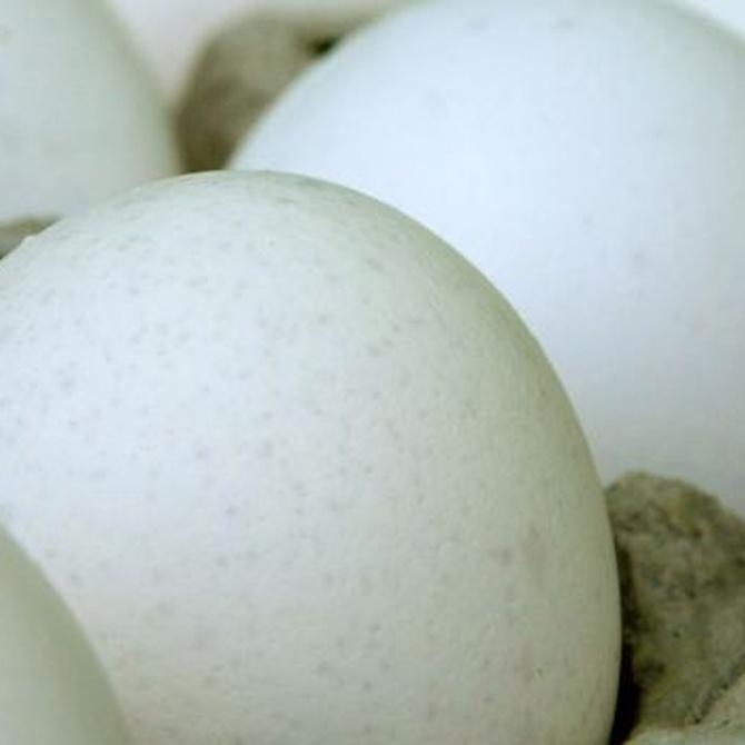 Ventajas de los huevos ecológicos