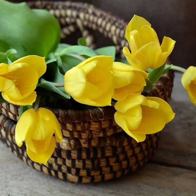Regala la flor perfecta para cada ocasión
