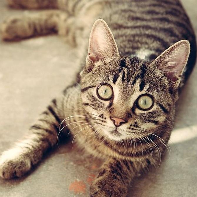 Alimentos prohibidos para tu gato