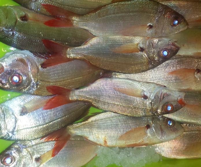 Aligotes de anzuelo: SERVICIOS de Pescastur