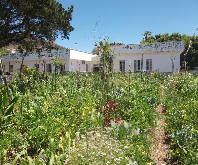 Cuidando y creciendo: Proyectos y Servicios de Asociación Domitila