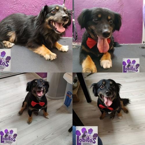 Tienda de mascotas en Alicante | Lobito's
