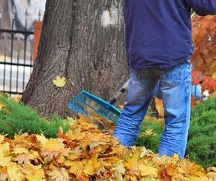 Limpieza y reformas de jardines