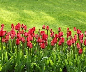 Mantén tu jardín alejado de las plagas este verano
