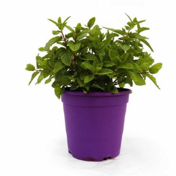 Hierbas aromáticas: Productos de Garden La Palma