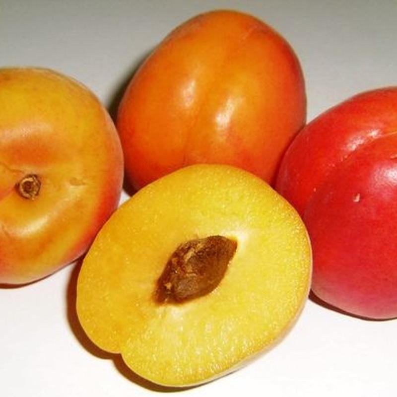Frutas de hueso: Productos de Uniland