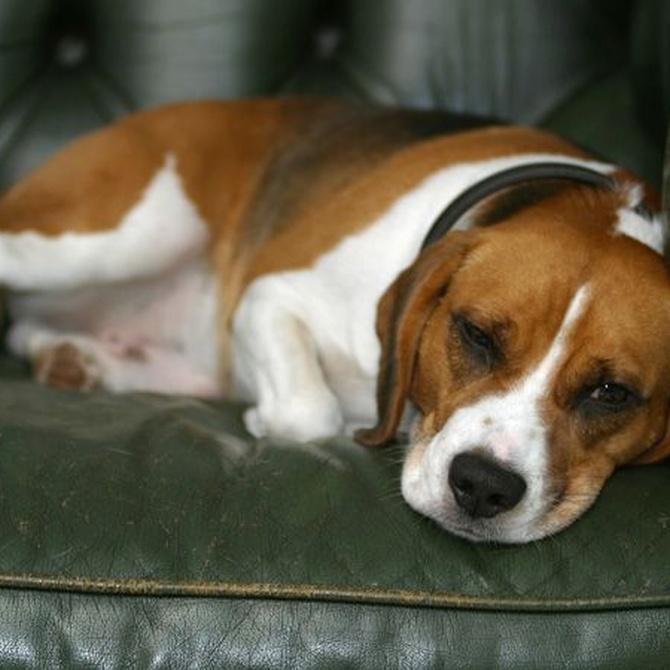 ¿Los animales se deprimen?