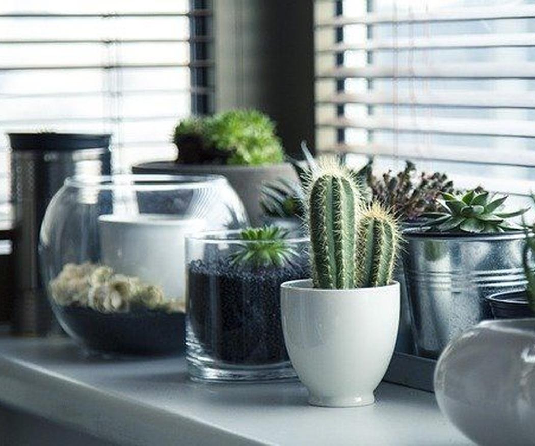 Las plantas de interior más populares