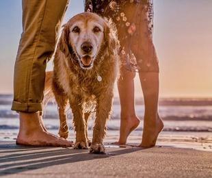 Ayuda a tu perro a sobrellevar el calor con estos consejos