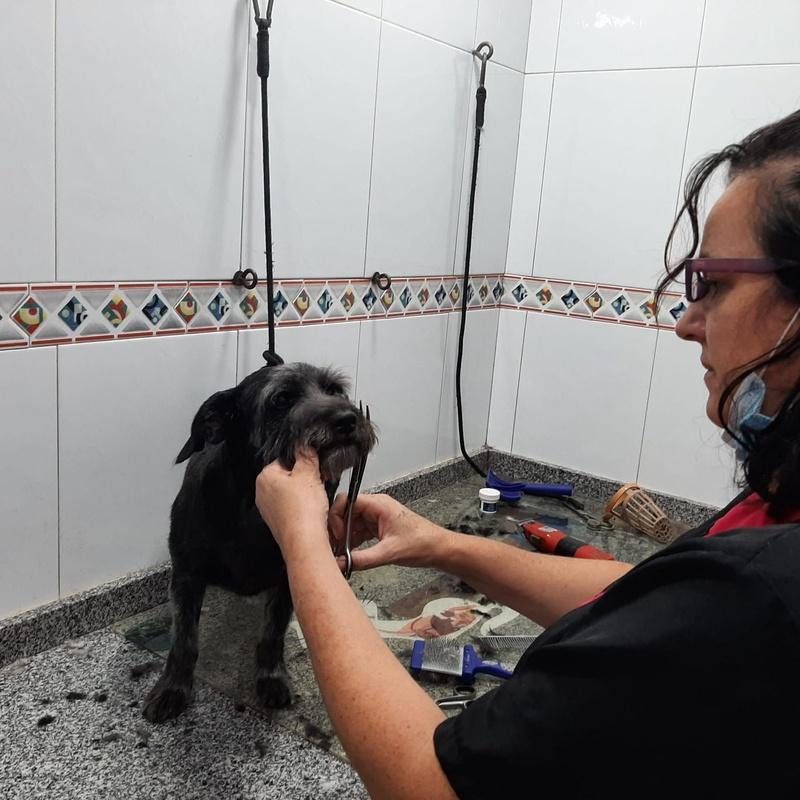 Servicio de peluquería.:  de Clínica Veterinaria Rocafort