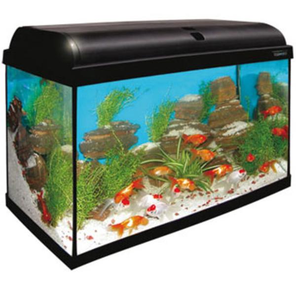 Kit acuario aqualight 100: Tienda Virtual Planeta Azul de Planeta Azul