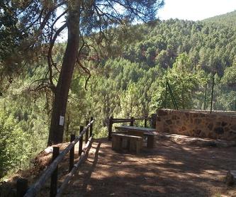 Puentes y puertas en nuestro viaje: Servicios que ofrecemos  de Psicóloga Mariana Pesci