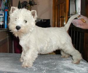 Tucán & Tu Can, peluquería canina en Valencia