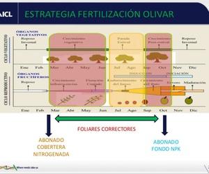 Estrategia de fertilización óptima en olivar