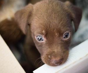 Charlas de Nutrición, Etología y Adopción canina
