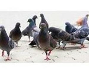 Control de aves en Logroño, La Rioja
