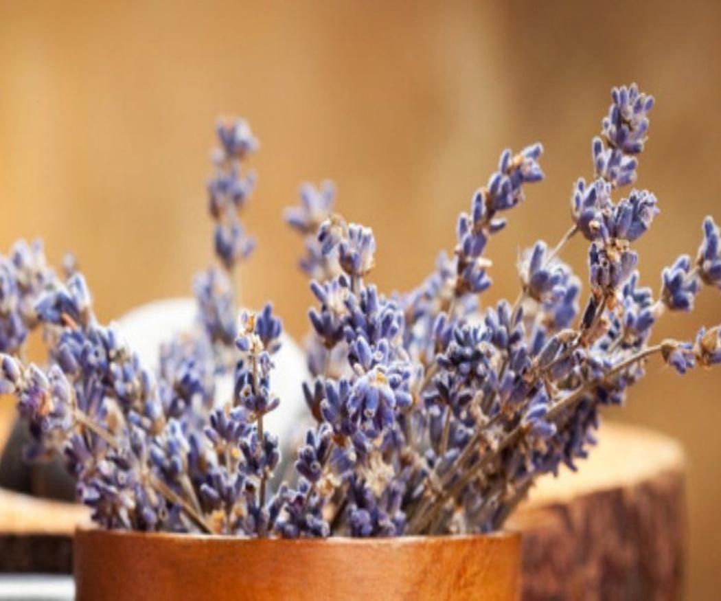 Homeopatía en la etapa infantil