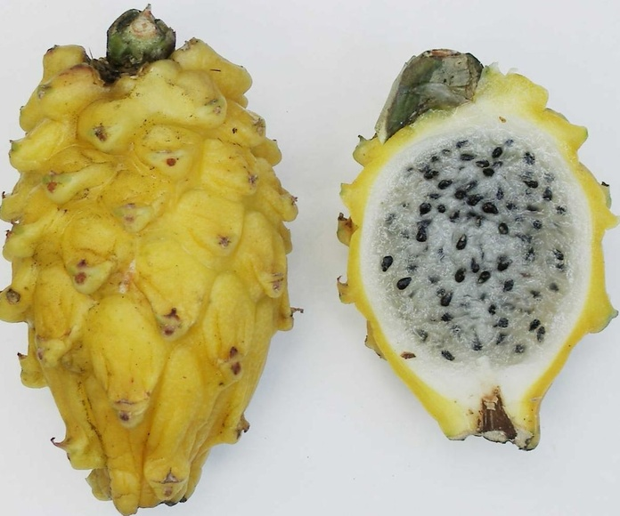 Pithaya amarilla: Productos de Mundifruit