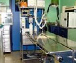 Todos los productos y servicios de Veterinarios: Clínica Veterinaria Canillas