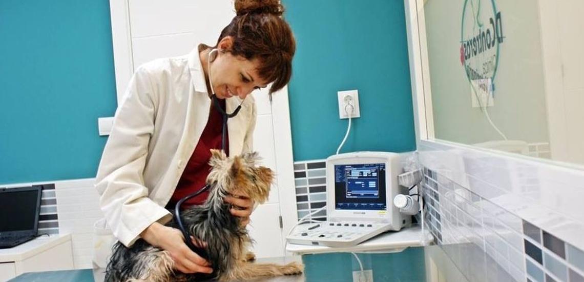 Clínica con urgencias veterinarias en Vallecas