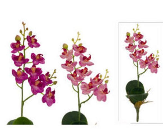 Orquídea pequeña con hojas x 9 flores