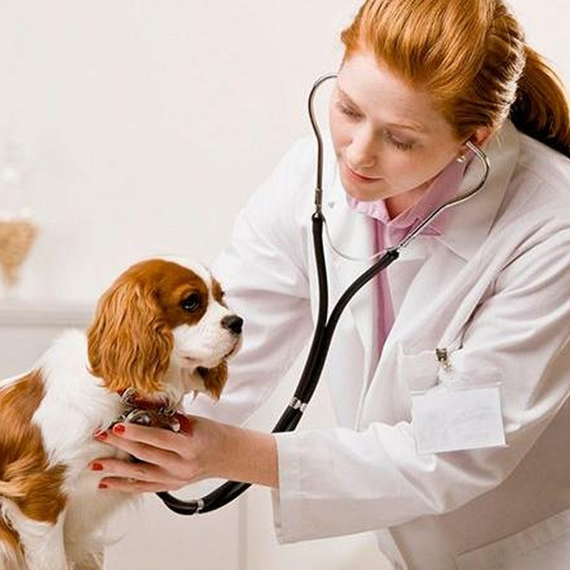 Medicina interna: Servicios de Centro Veterinario Los Alpes