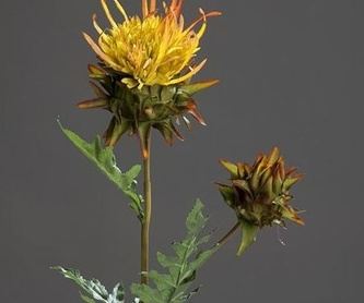 Rosas tamaño medio: CATÁLOGO de Fernando Gallego, S.C.P.