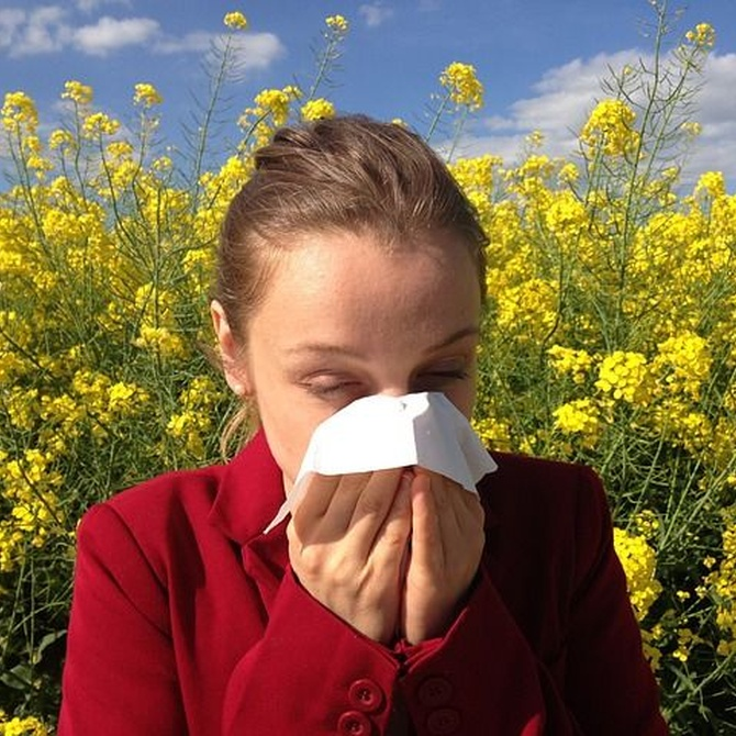 Las alergias y la conducción