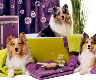 mantenimiento y puesta en marcha de acuarios: Servicios de Compañeros Tienda De Mascotas
