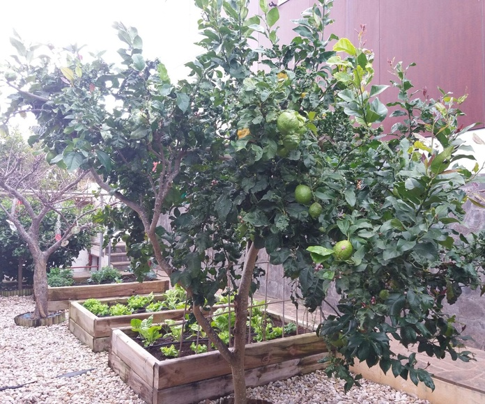 Jardinería: Servicios de GT Verde