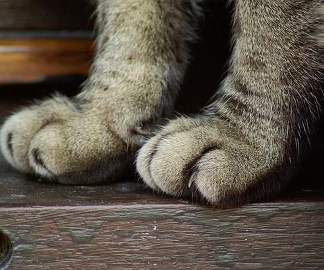 Cómo cuidar las uñas de tu gato